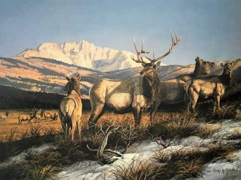 Challege at Elk Flats