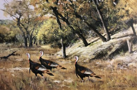 Hill Country Turkeys