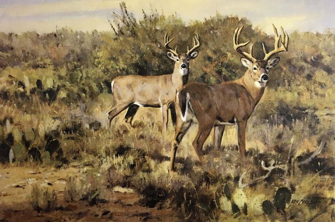 Ken Carlson - u0026quot;South Texas Whitetailsu0026quot; - Collectors Covey
