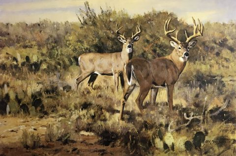 South Texas Whitetails