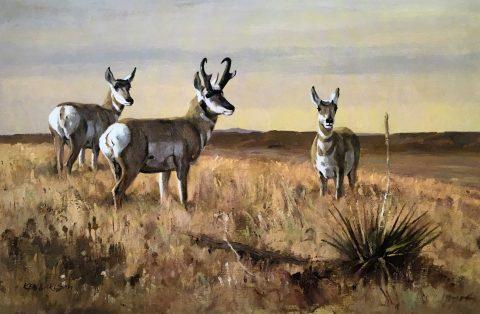 Trans-Pecos Antelopes