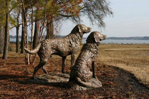 Chesapeake Bay Retriever pair