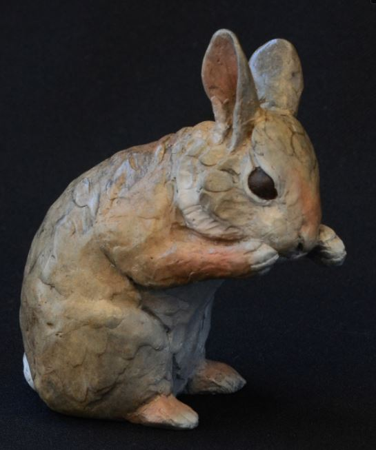 cottontail-viii