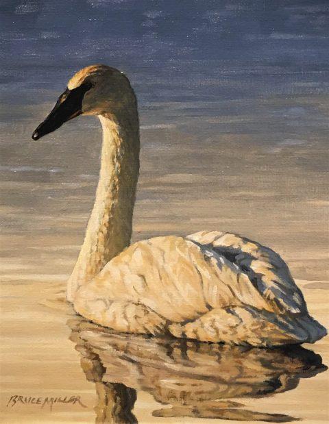 Bruce Miller Trumpeter Swan