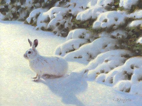 Claudio d angelo-Snowshoe Hare-Oil-9x12-$1600