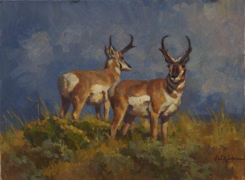 Chad Poppleton- Pronghorn Antelope
